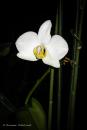 I sovrumsfönstret blommar min orkidé så fint.