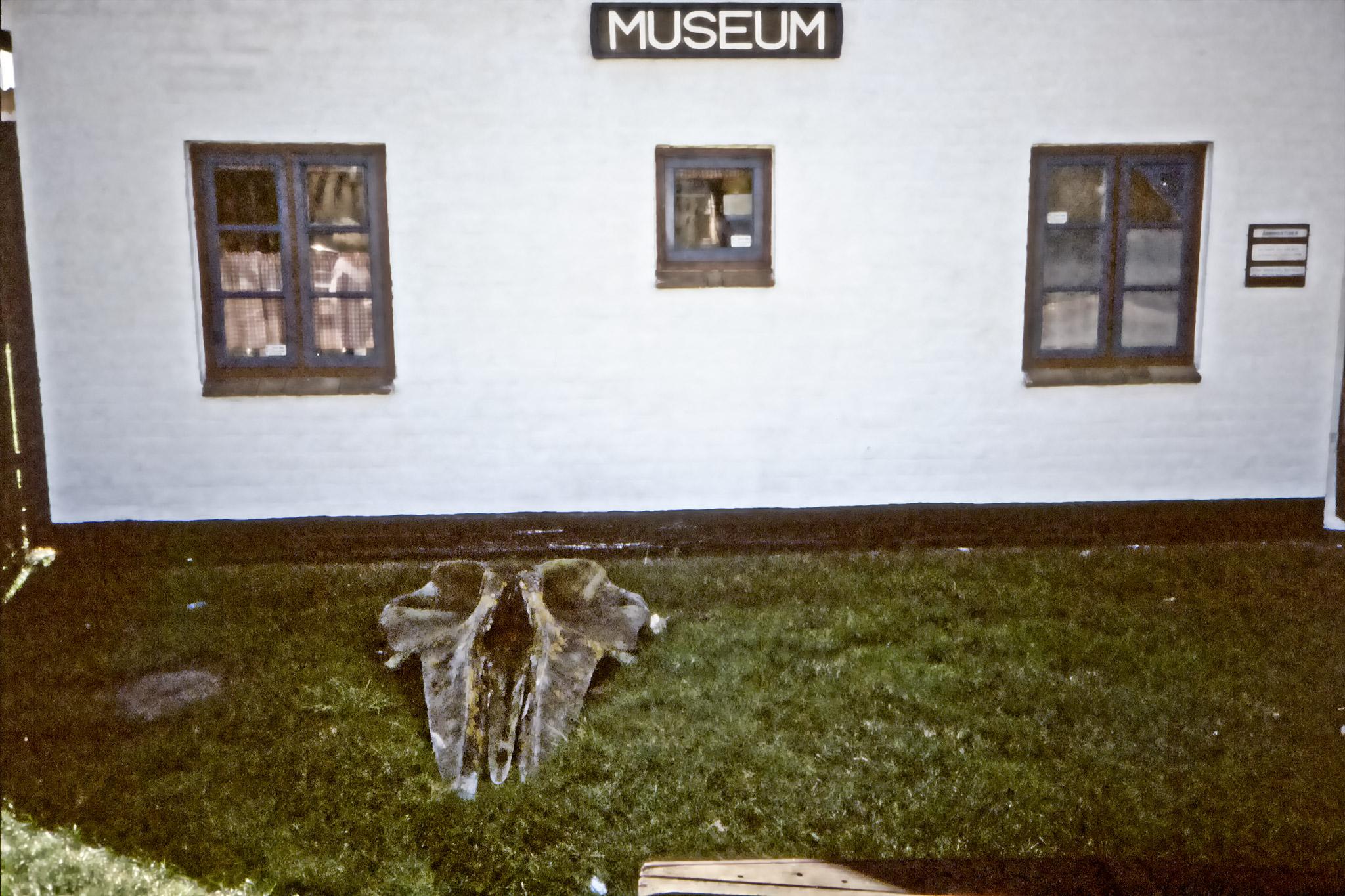 Valkranium framför ett litet muséum.