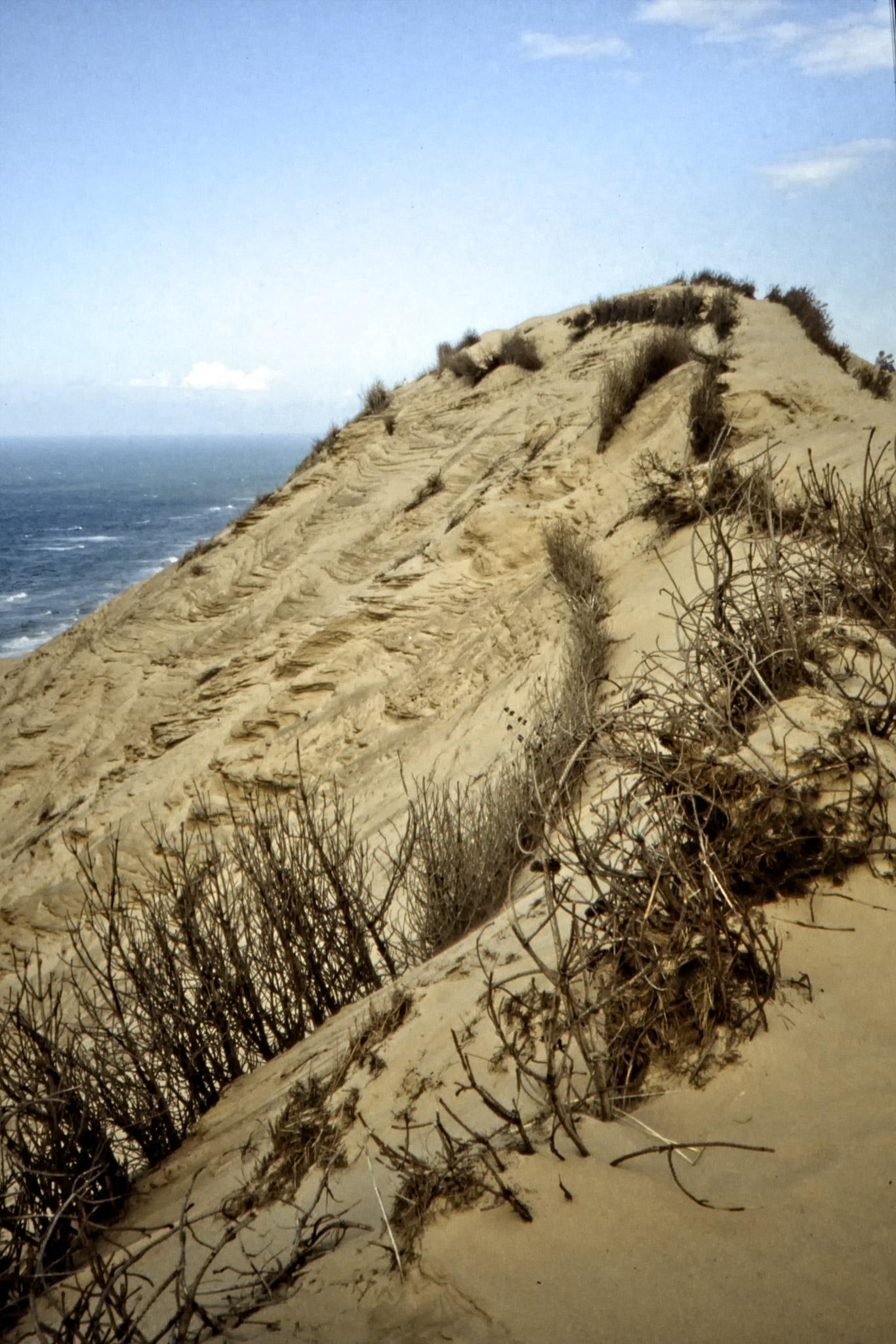 Sanddyn på Jyllands västkust.