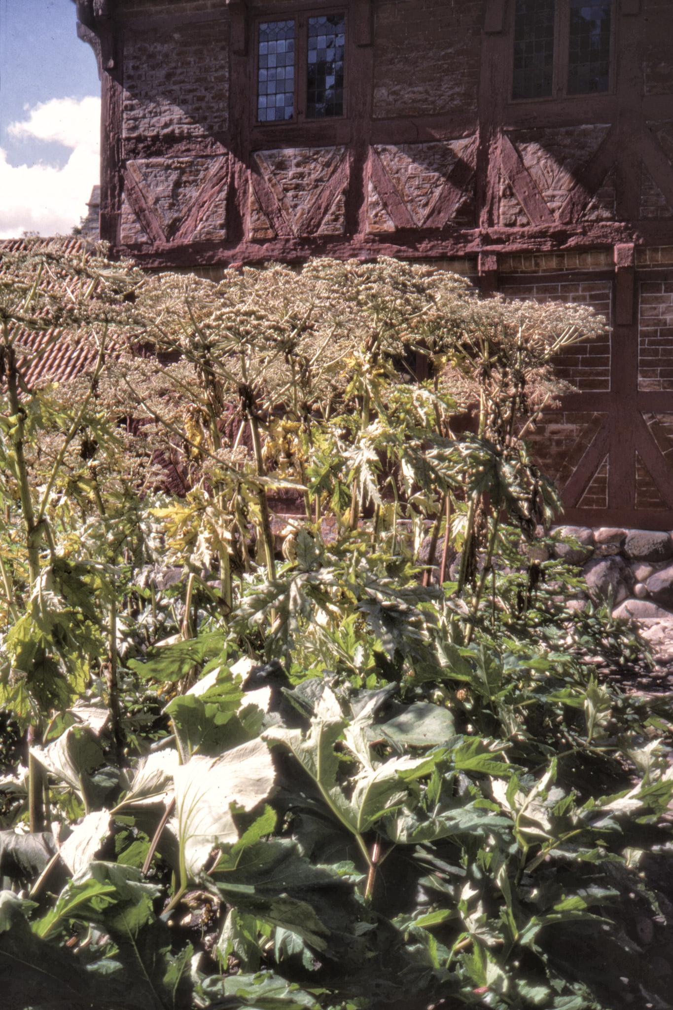Blomställningar i den Gamle By.