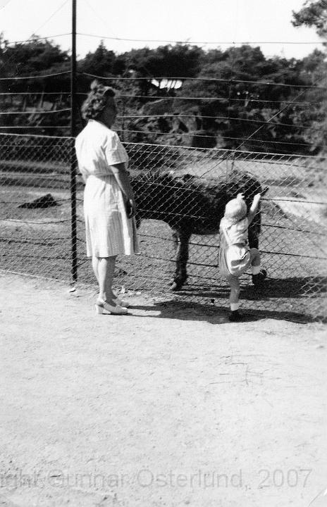 Jag och mamma tittar på djuren i Slottsskogen, Göteborg