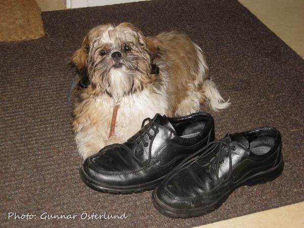 Husses skor är välbevakade.