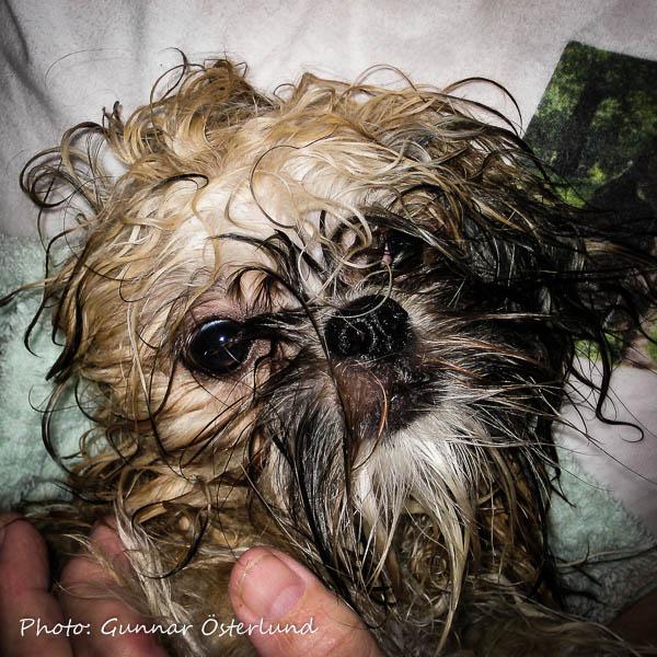 Till sin förtret fick Mimi finna sig i att bli badad och rengjord.