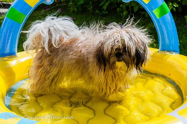 Mimi älskar att bada.