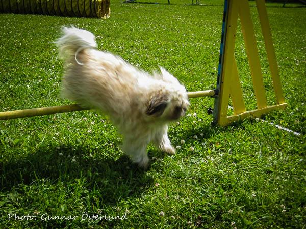 Mimi hoppar höjd.