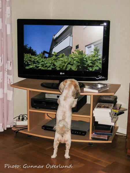 Mimi har koll på TV-utbudet.