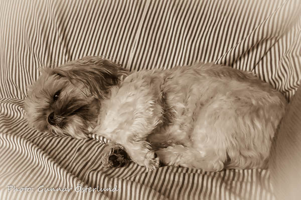 Mimi älskar att slappa i soffan.