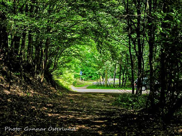 Skog i närheten av Rhen.