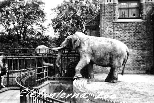 Elefant på Köpenhamns Zoo