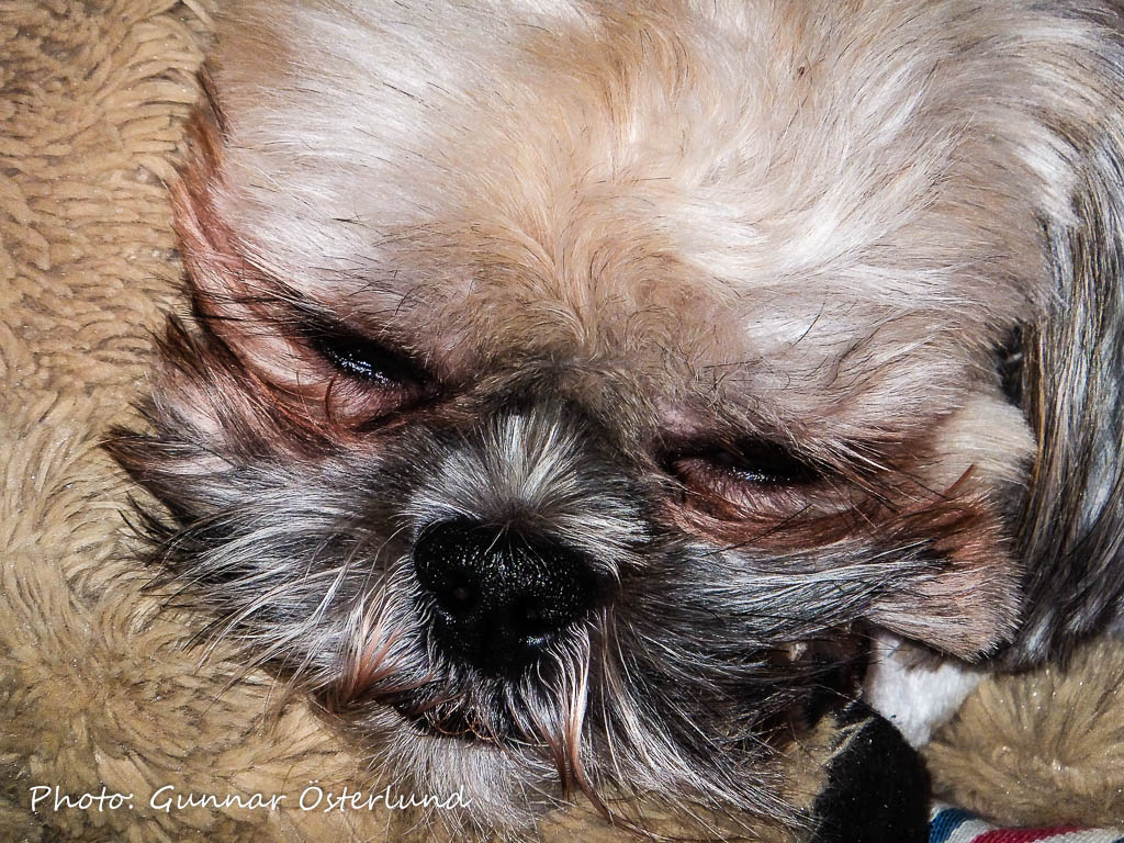 Att få vila i soffan är bland det skönaste som finns tycker Mimi.