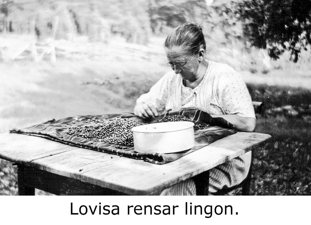 Lovisa Österlund rensar lingon