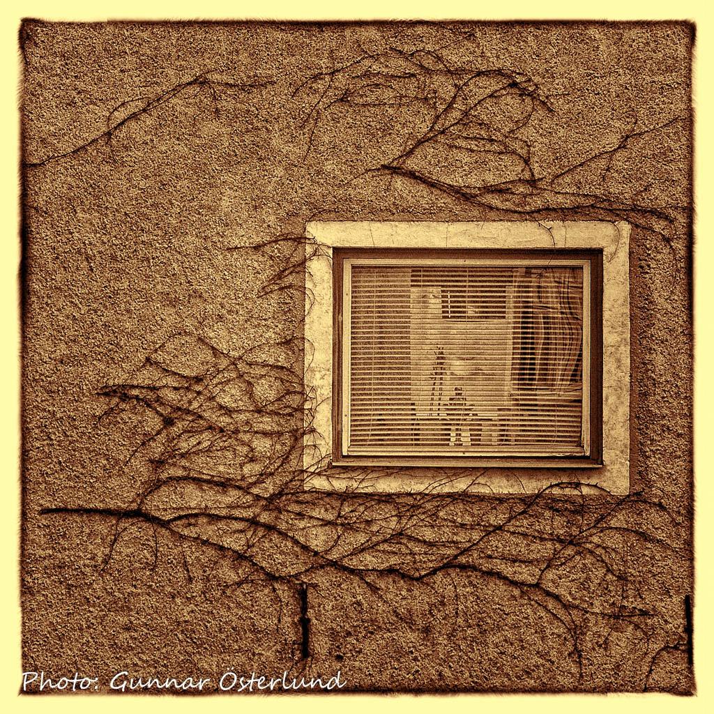 Bevuxen vägg med fönster.