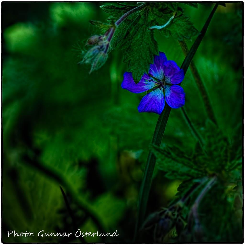 Blomma bland allt grönt.