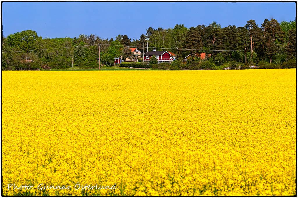 Svensk försommar