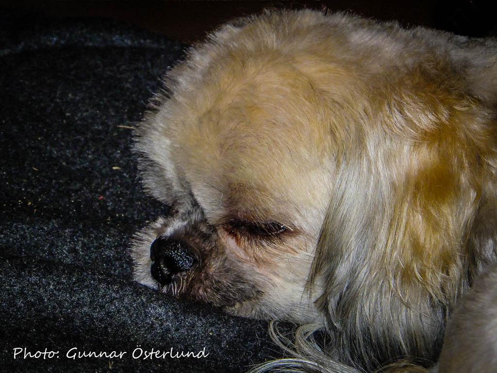 Mimi är trött.
