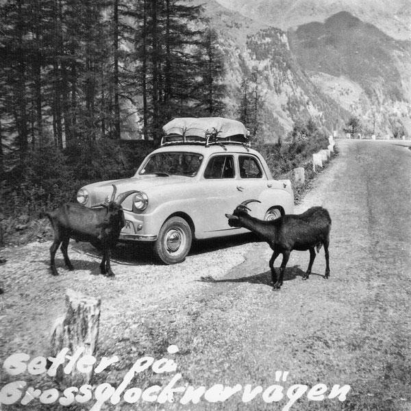 Getter på Grossglocknervägen.