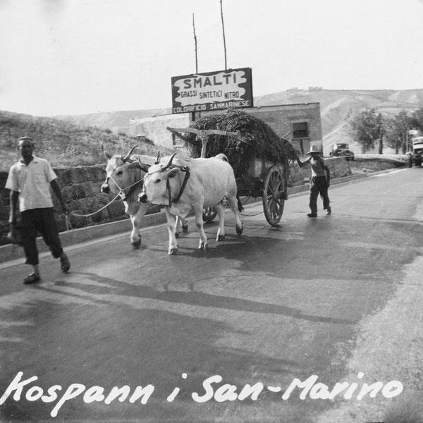 Kospann i San Marino. Att kor användes som dragdjur var inte ovanligt.