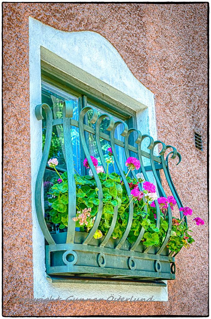Fönsterblommor