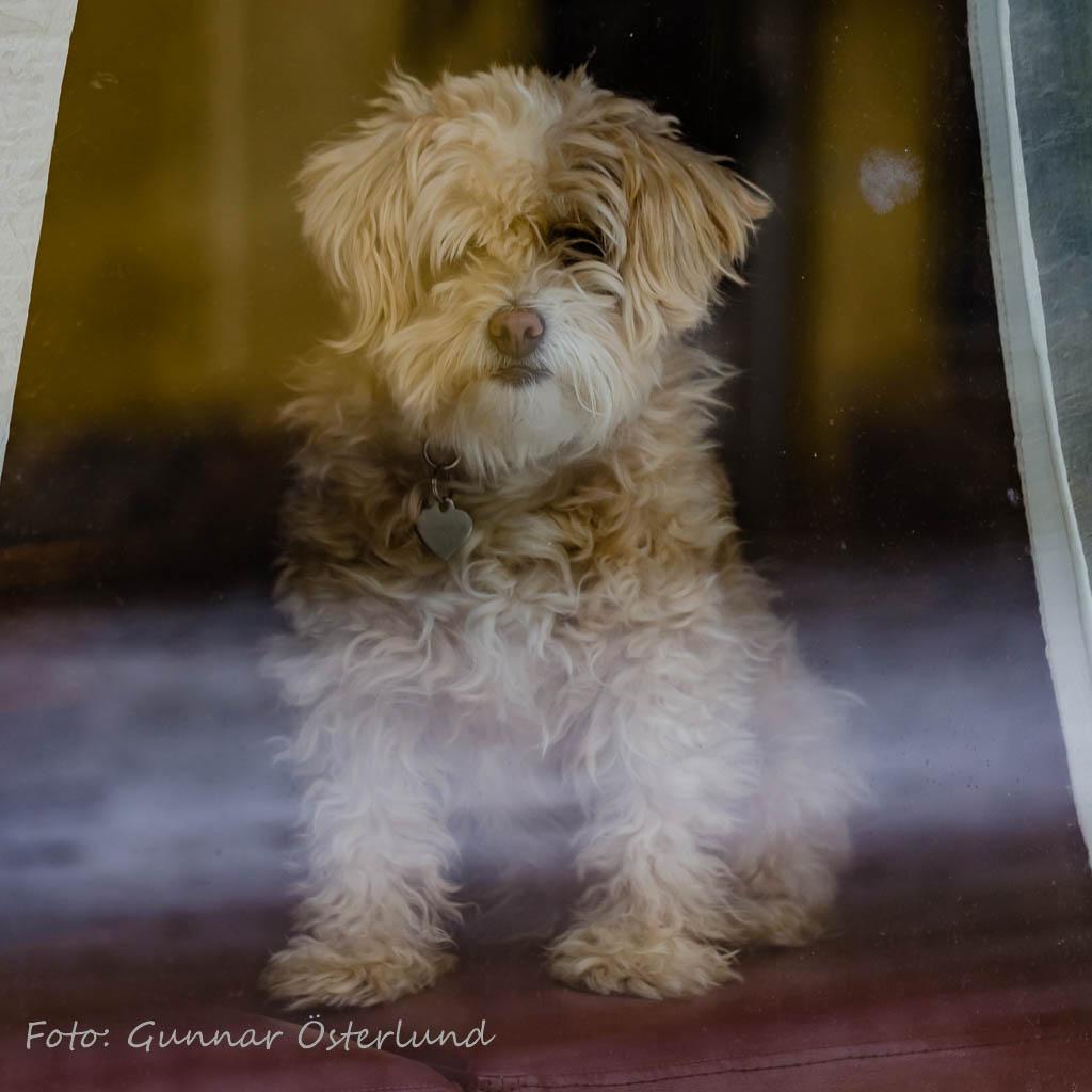 Hundbevakning