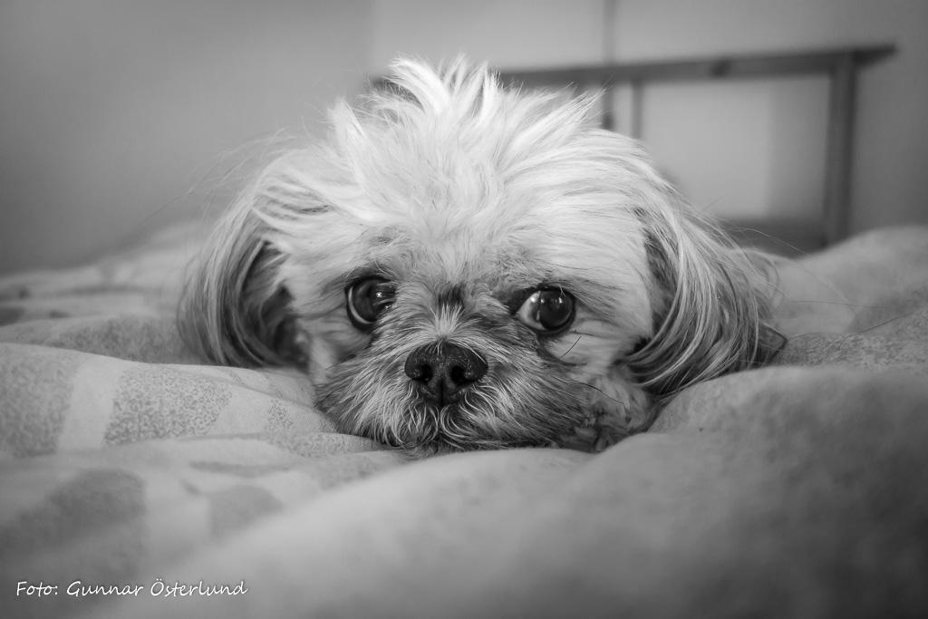 Mimi vill så gärna ligga kvar så länge som möjligt i sängen på morgonen.