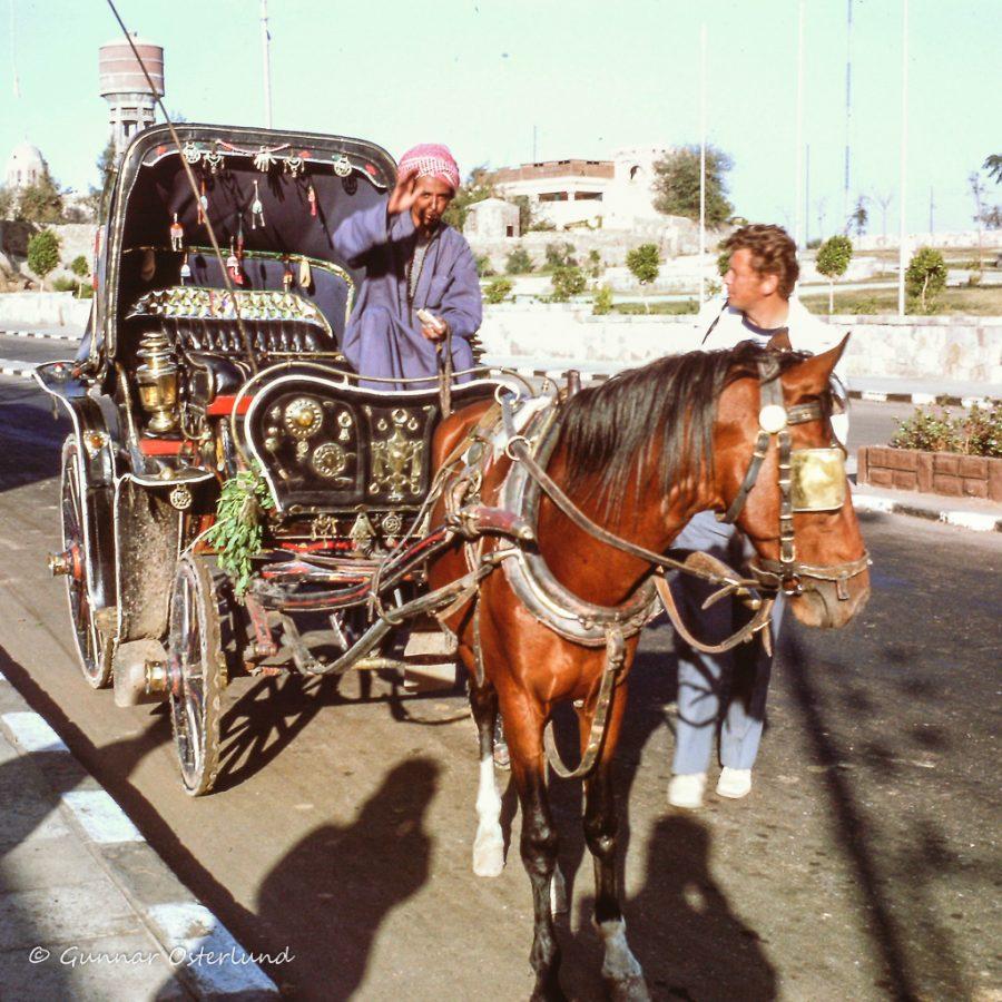 Hästdroska i Assuan.