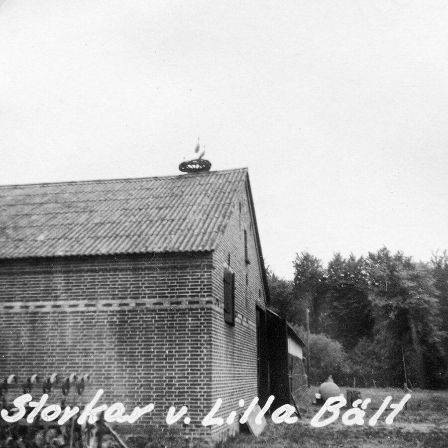 Nära Lilla Bält fanns detta storkbo.